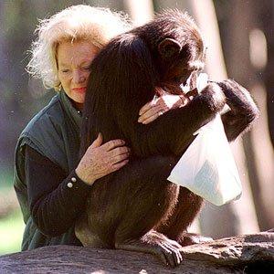chimpanzee Kalu